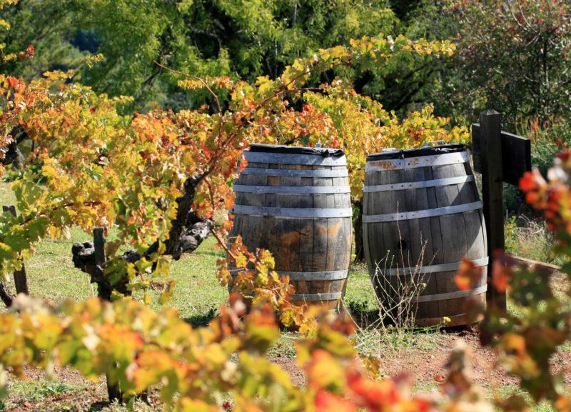 Ιστορίες του κρασιού της Λήμνου