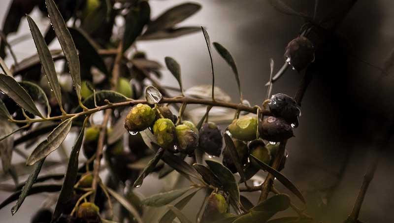 Η Κρητική Διατροφή & η αξία της στο πέρασμα των αιώνων