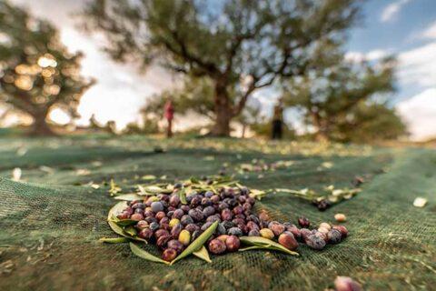 Η Ελλάδα ανέλαβε τον συντονισμό για τη Μεσογειακή Διατροφή το 2021